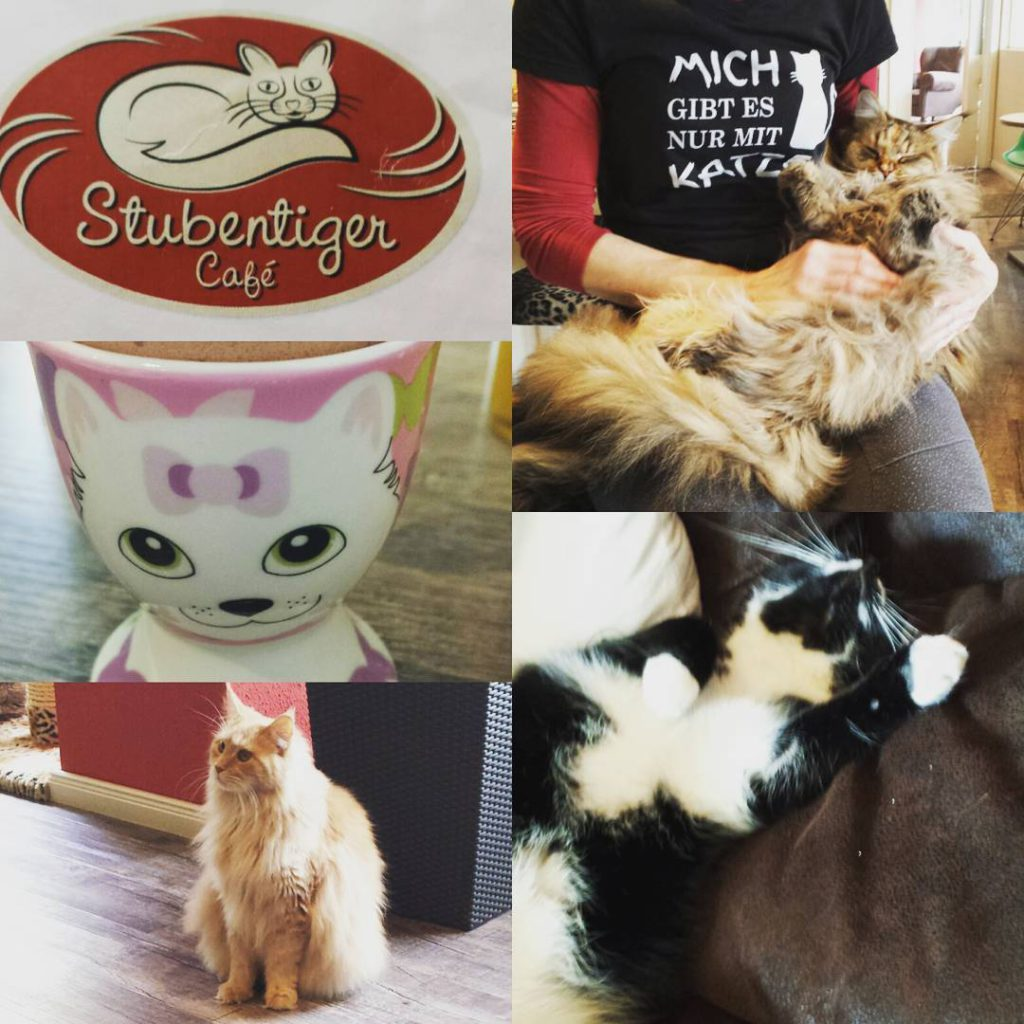 Gestern waren wir an einen besonderen Ort fr alle Katzenliebhaberhellip
